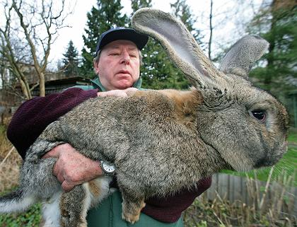 Giant wabbit