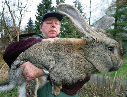 Giant wabbit