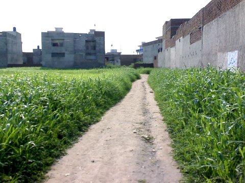 Path around the crops