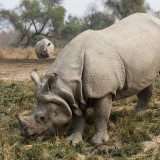 The Rhinos of Lal Suhanra National Park
