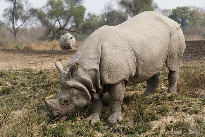 Rhino Lal Suhanra National Park
