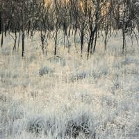 Infrared grassland Islamabad