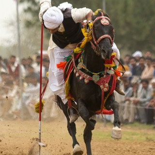 Galloping precision of tent pegging