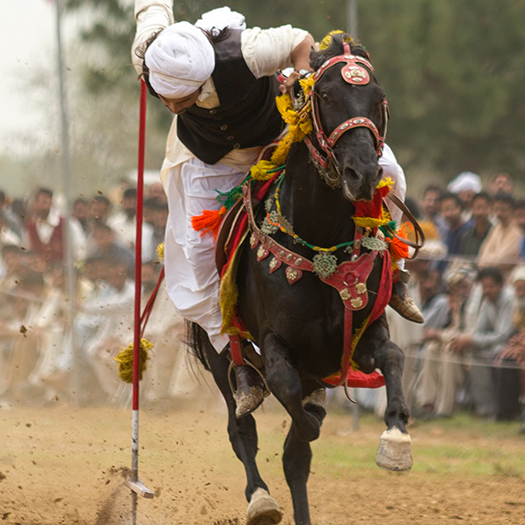Tent pegging horse gallop