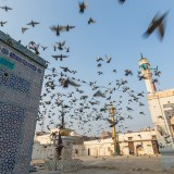 Pigeons at the tomb of Shah Yousaf Gardez